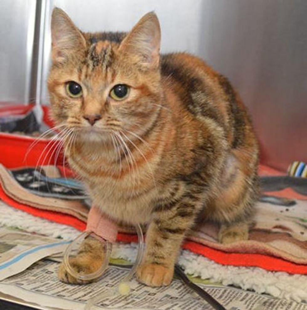 Rosie the Cat: Miracle Recovery After Life Saving Operation