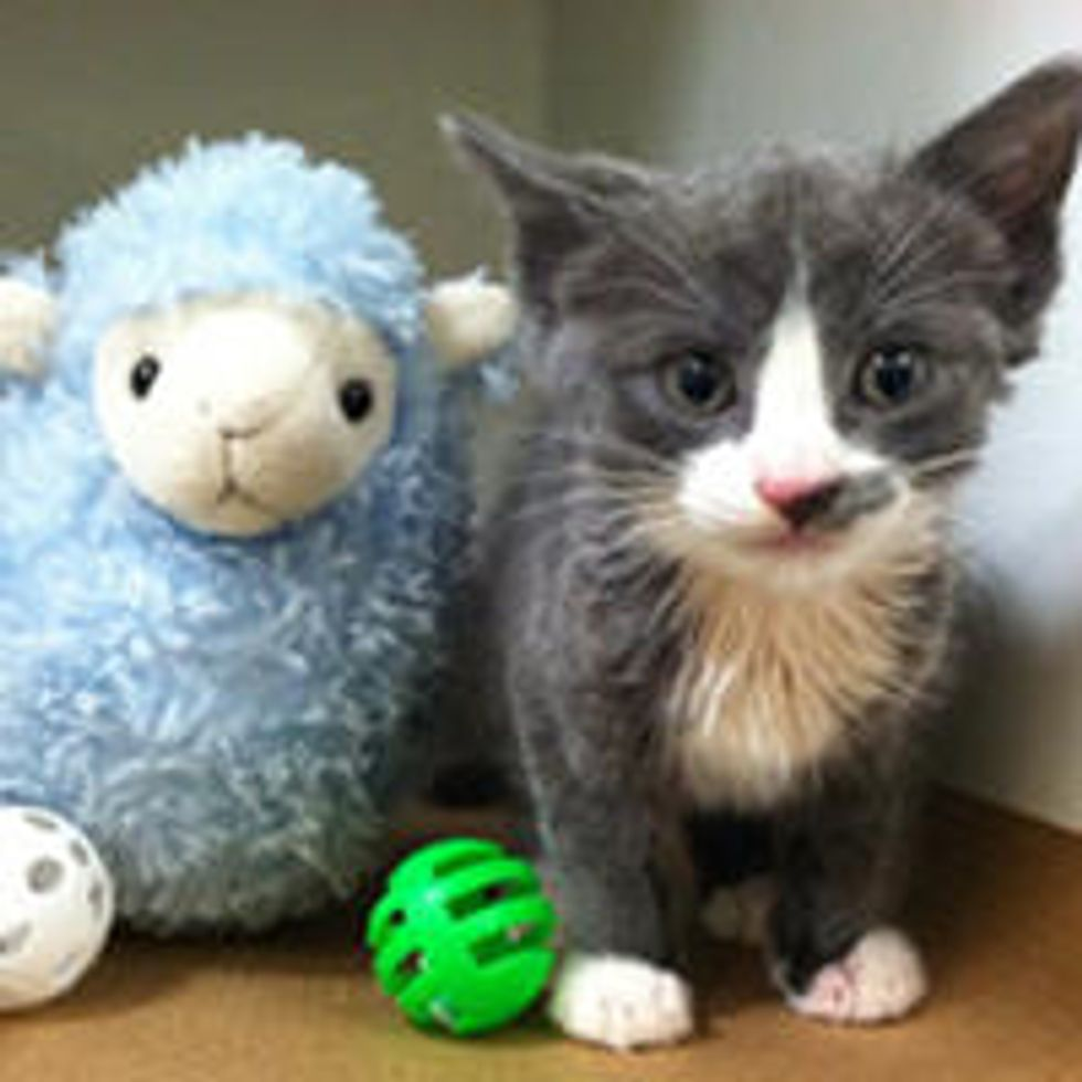 Tiny Kitten Saved From Garbage Can Now Gets A Ton Of Love & TLC