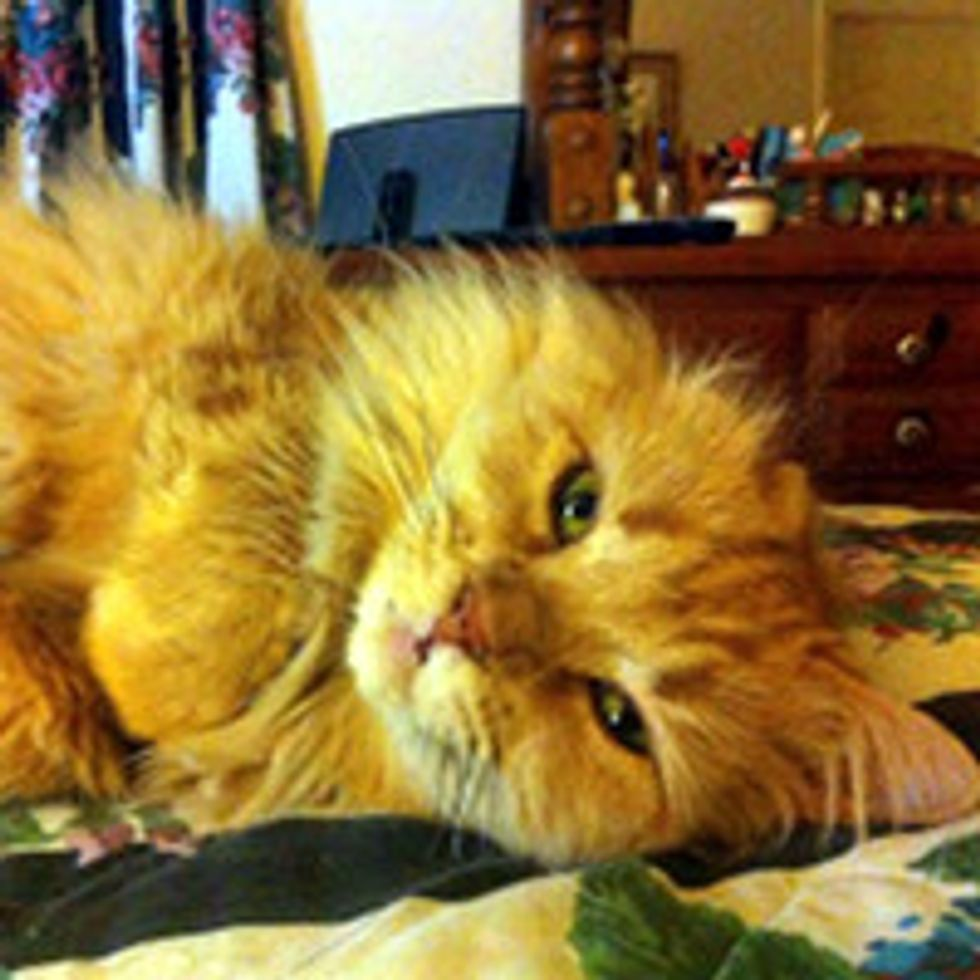 Rescue One-eared Cat Finds Love and Happiness