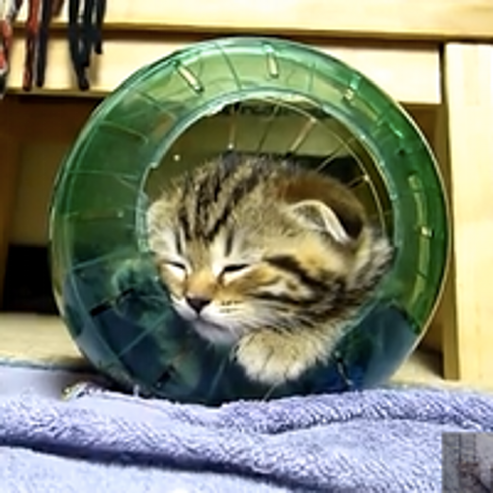 Kittens and Hamster Ball