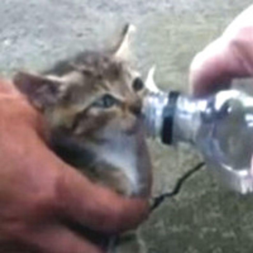 Firefighters Rescue Kitten From Car Wheel
