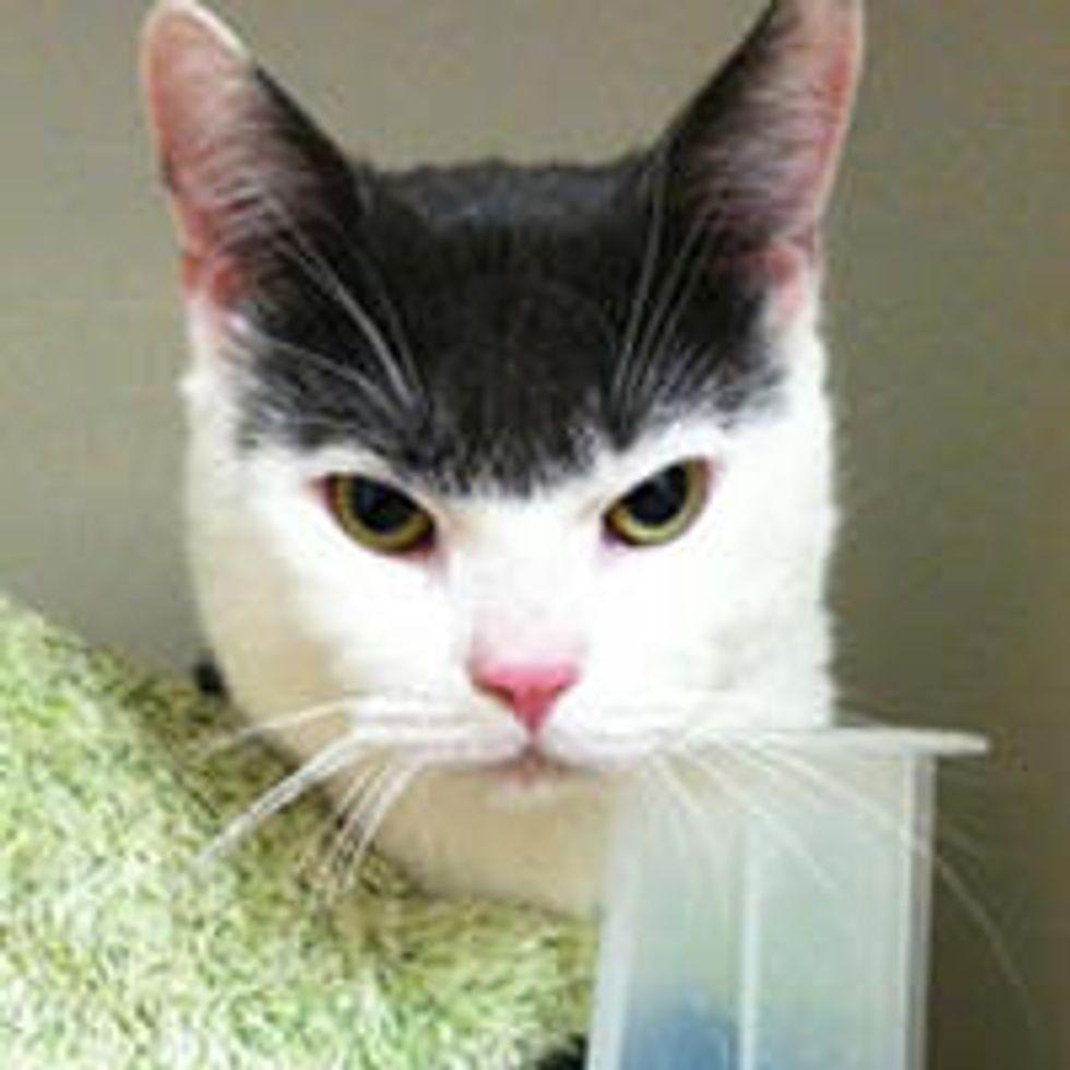 Rescue Stray Cat Wears A Bowl Cut