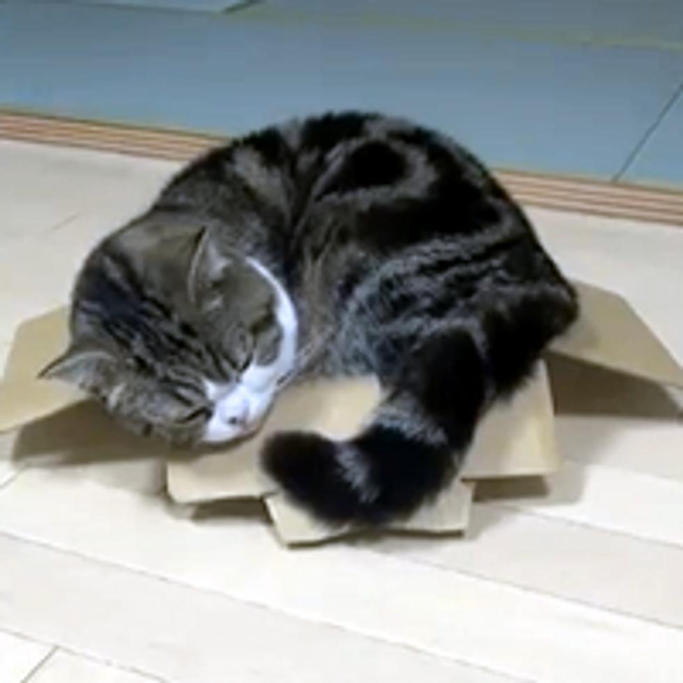 Sleeping Maru