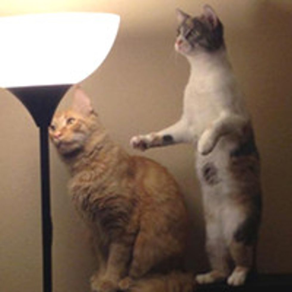 When Cats Find A Moth...
