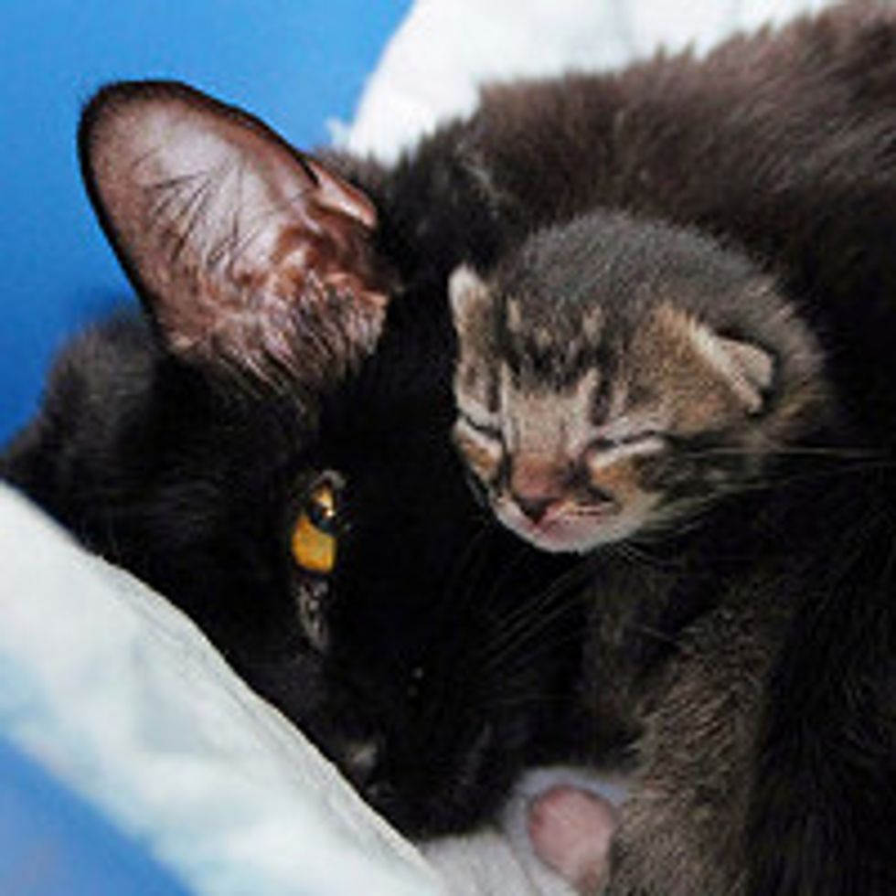 Mom Cat Finds Her Kittens A Safe Place