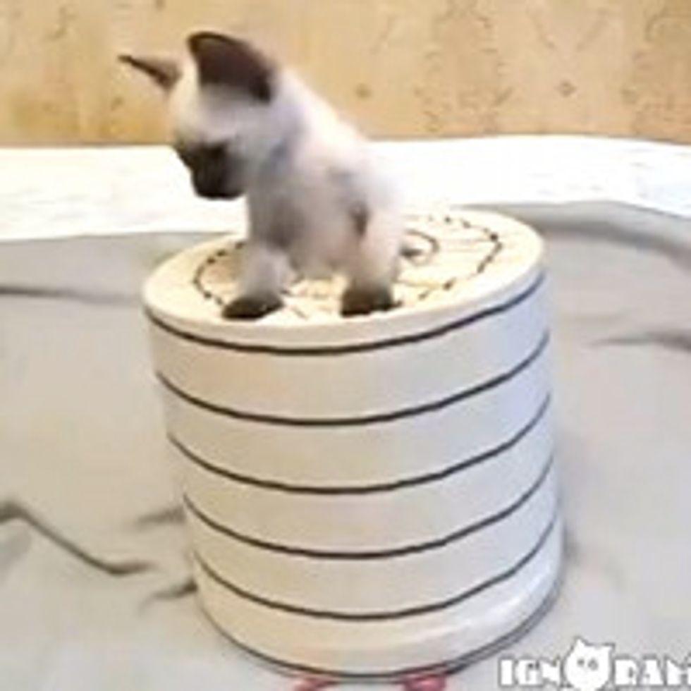 Pop-Up Kitty