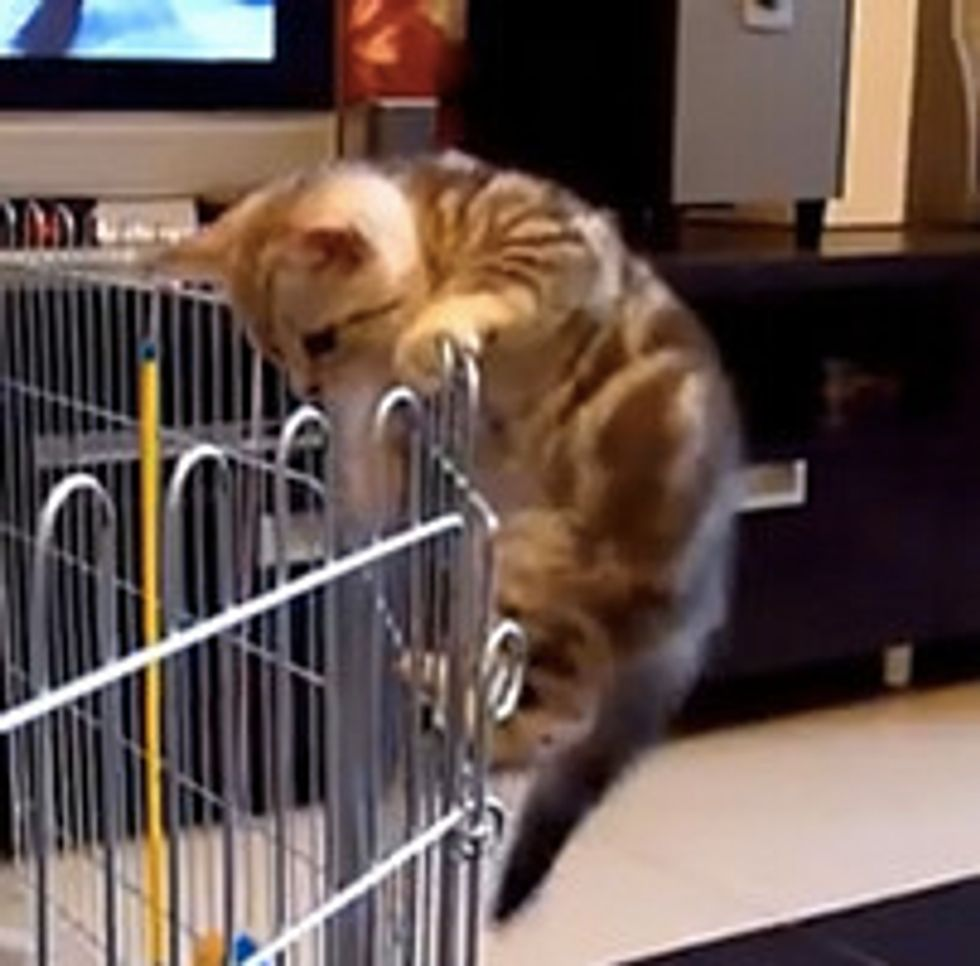 Kitty's Adventure To Home