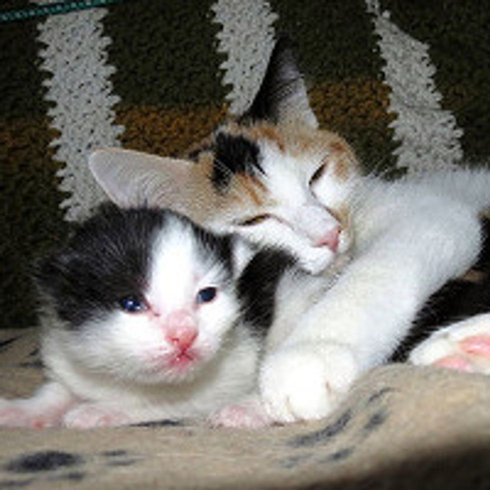 Sweet Cat Mama Lily