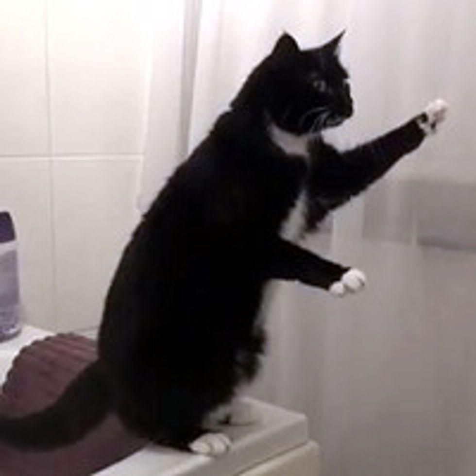 Cat Poses in Mirror