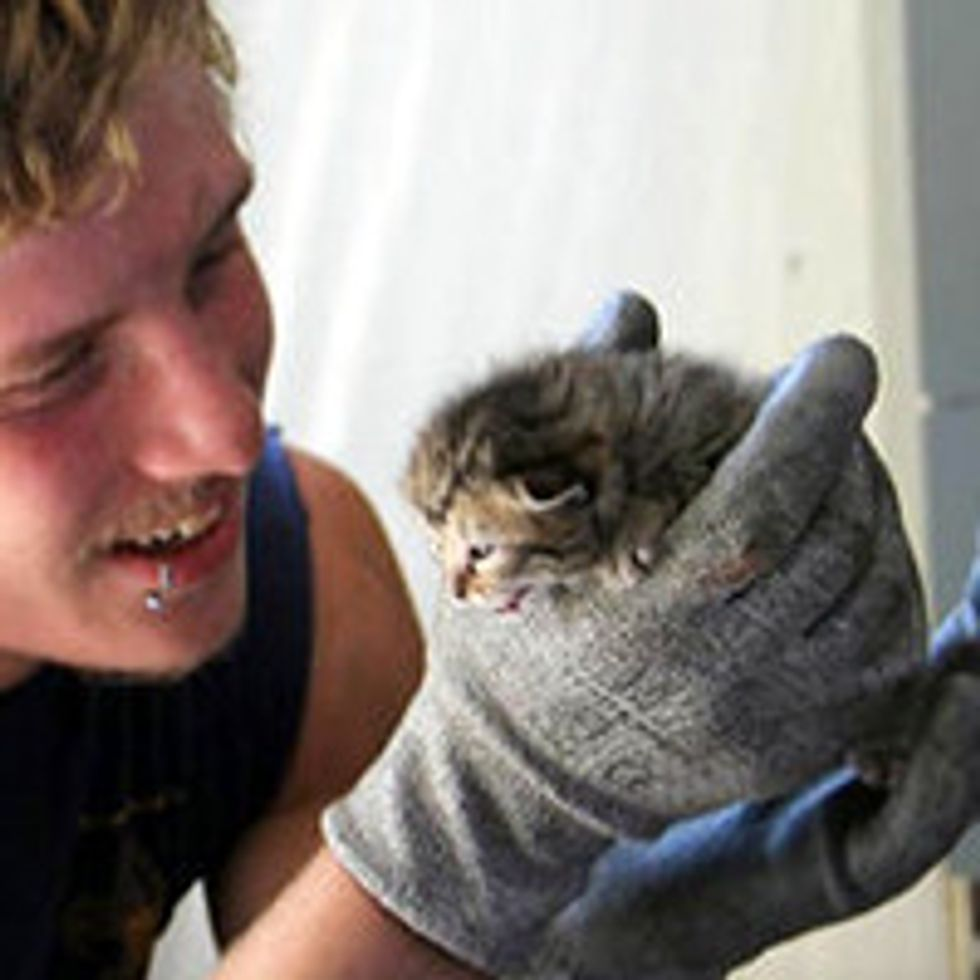 Three Kittens Saved From Crusher At Recycling Center