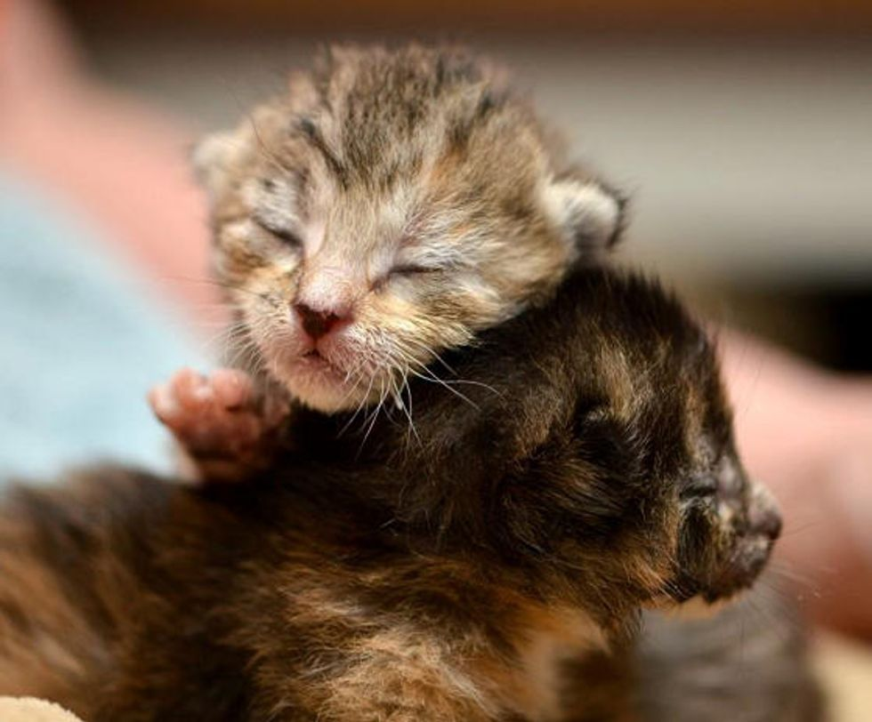 Tiny Orphan Kittens Find Warmth And Love