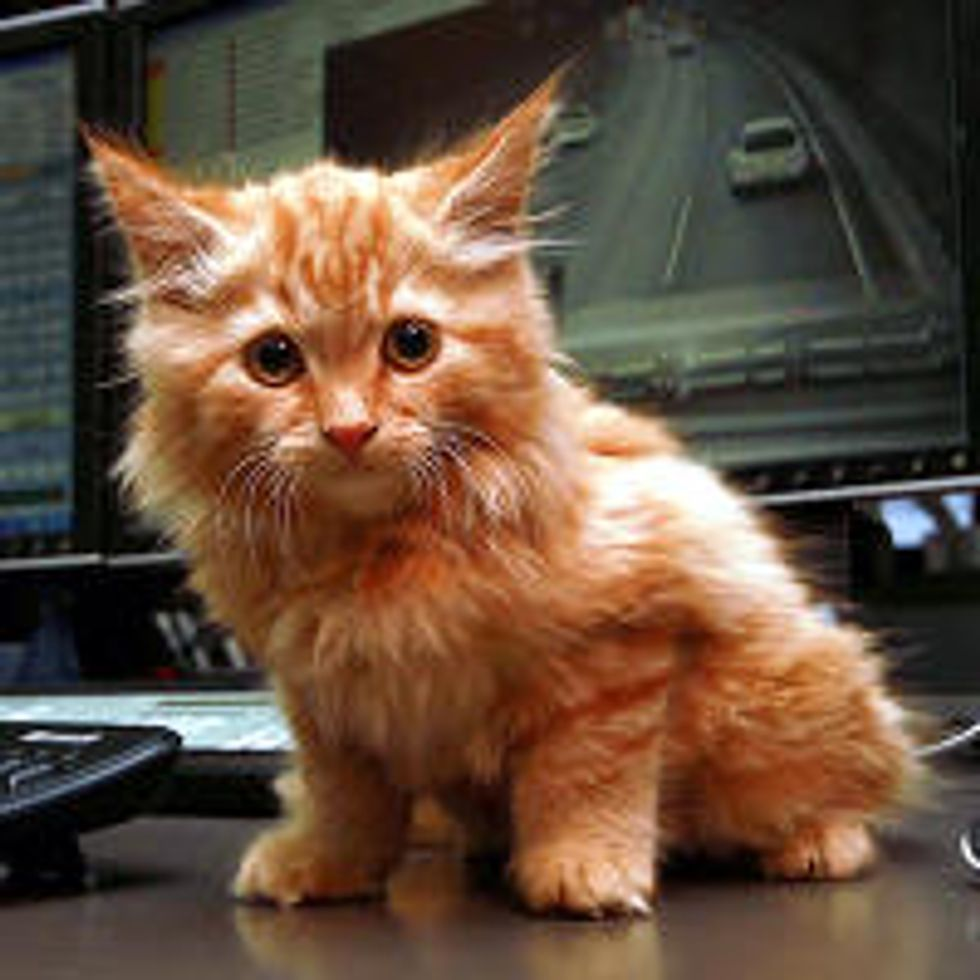 Dodge's Big Adventure - Kitten found in the Burnley Tunnel, Melbourne