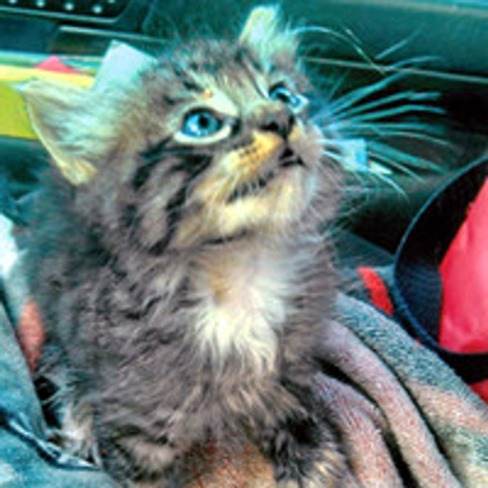 Kitten Saved From Water Drain By Postal Carrier & Finds Home With Fisherman