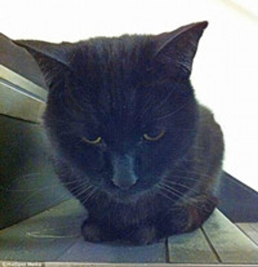 Beloved Cat Faces Eviction After Five Years at Royal Mail Sorting Office, Staff Campaign To Keep Him