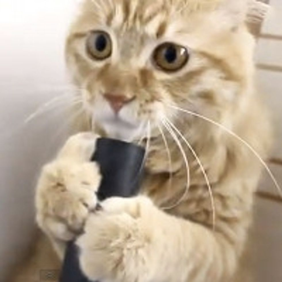Cat Plays With the Vacuum Cleaner