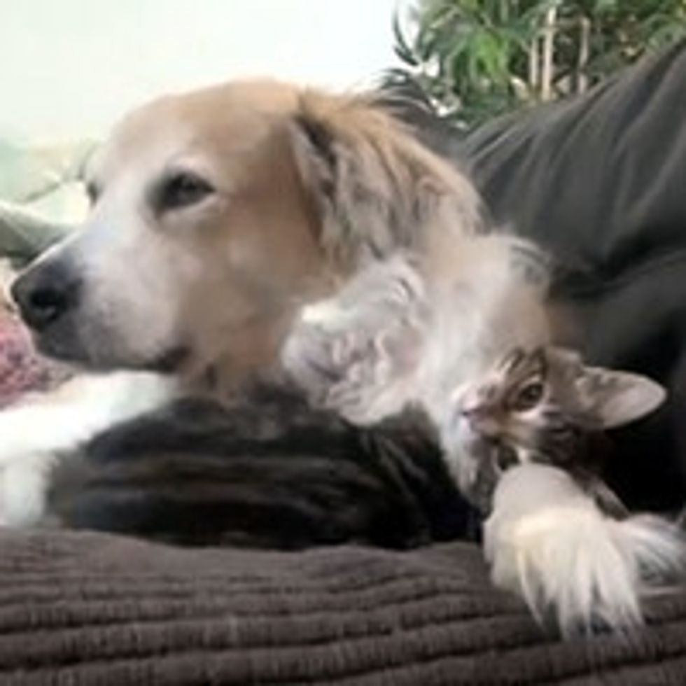 Wobblepants The Cat And Dog During Naptime