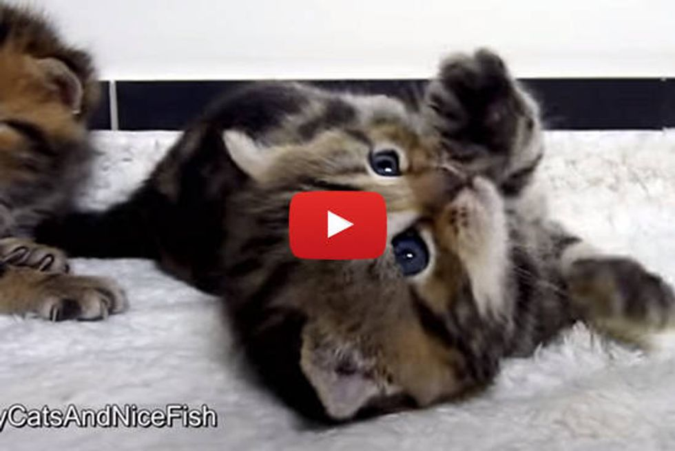 21 Cutest Kitten and Cat Stretching