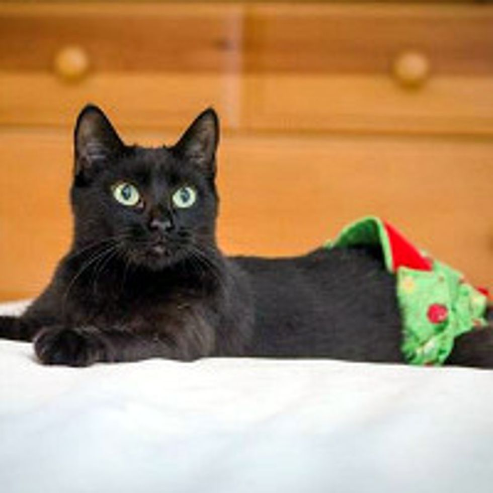 Tinsel The Cat Lost A Tail But Gained A New Life