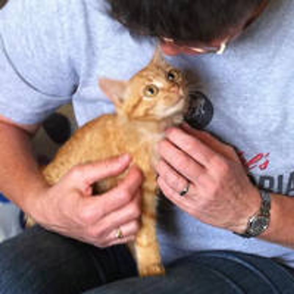 Tri-paw Ginger Cat From Bushes To Loving Home