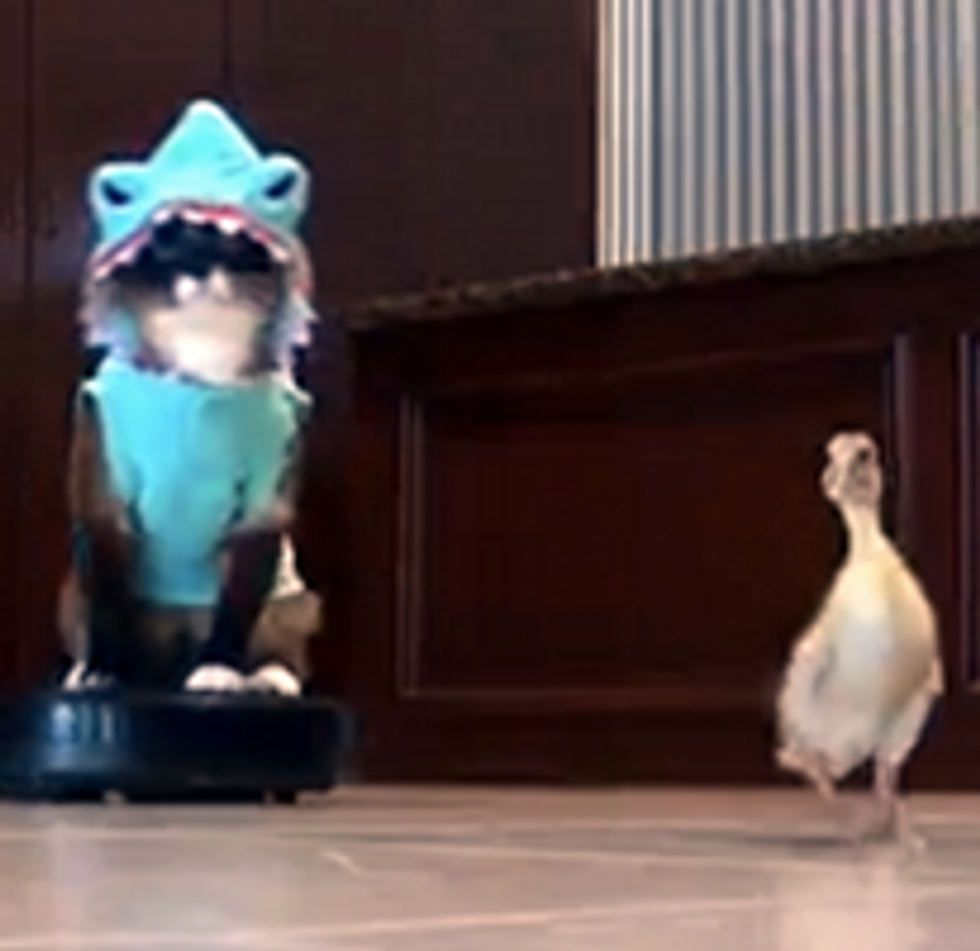 Shark Kitty and Duckling
