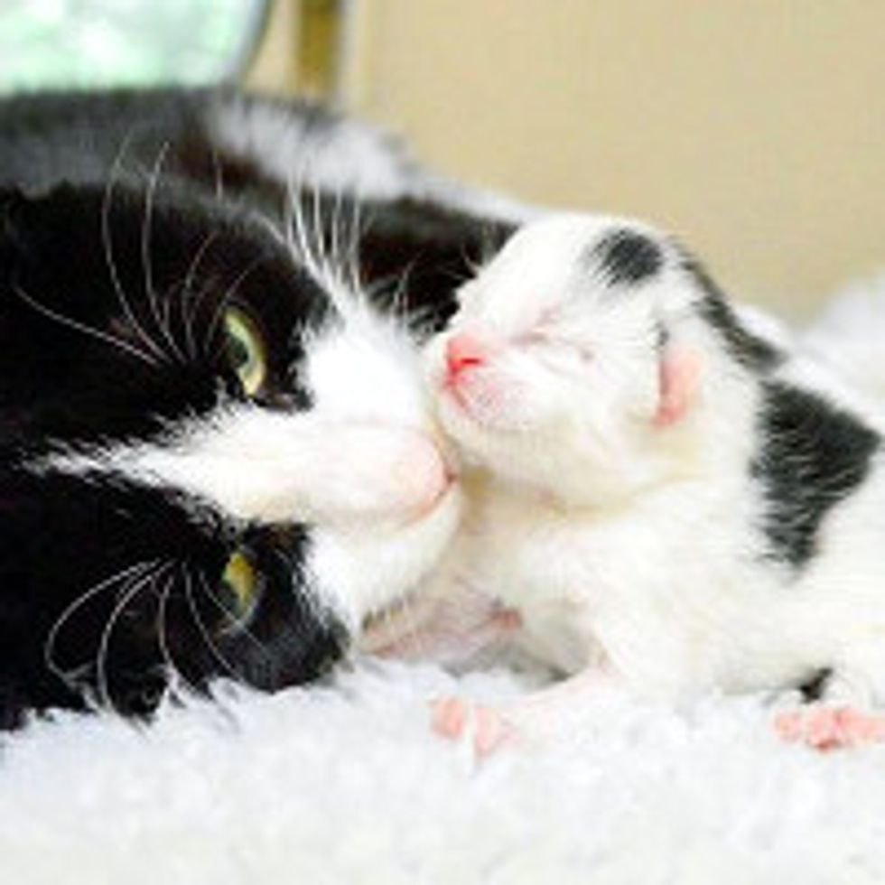 Heavily Pregnant Stray Saved And Gives Birth Next Day