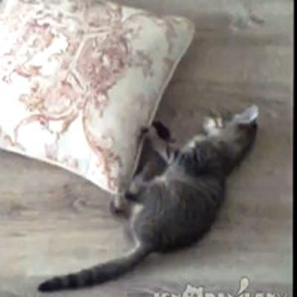 Kitty Spinning Cushion