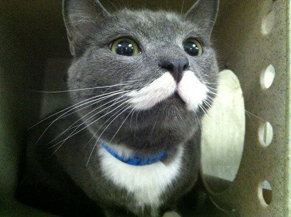 Mr. Meowgi The Mustache Kitty Finds Home