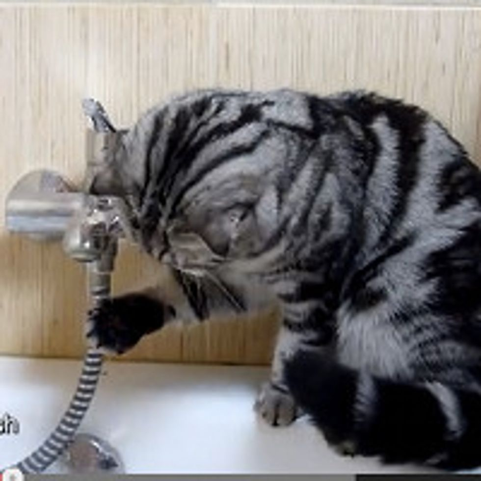 Cat Catches Water