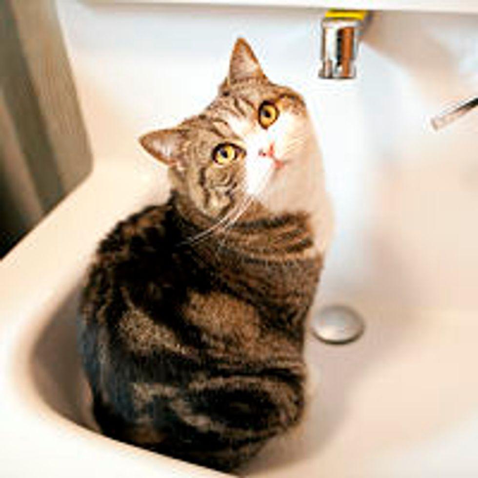 Maru Loves Sink Water