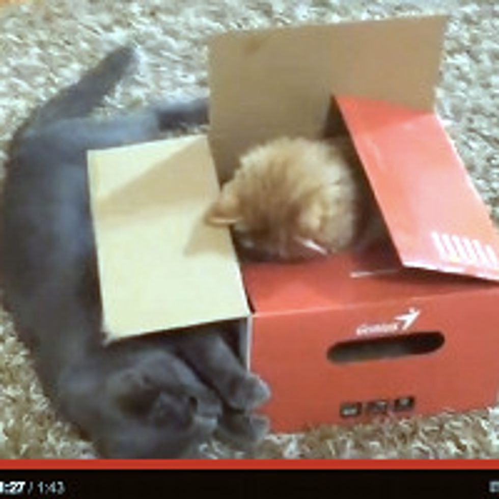 Two Cats and One Box