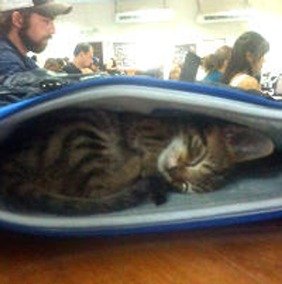 Kitten Fostered by University Naps In Class With Students
