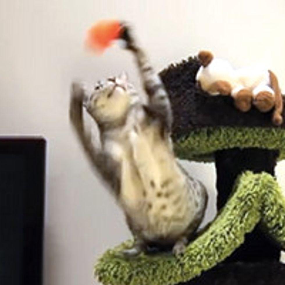 Will Kitty Catch It?