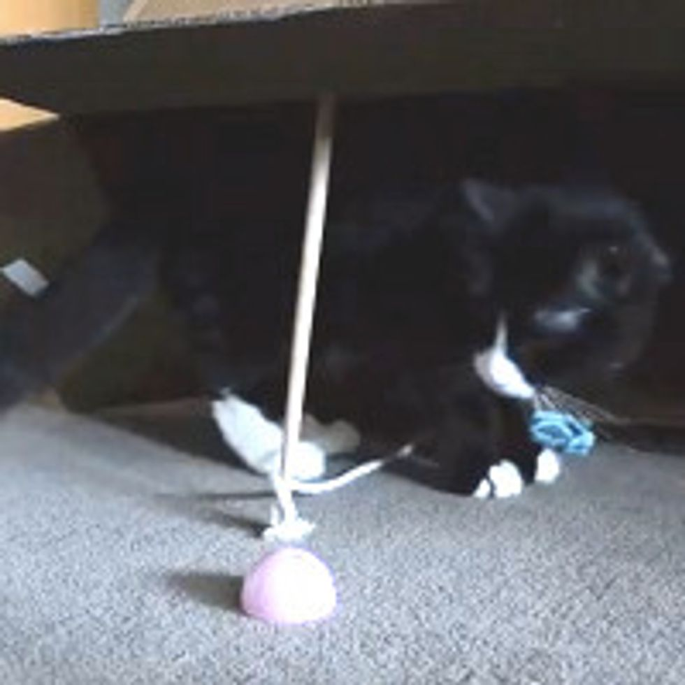 Box - A Very Obvious Cat Trap