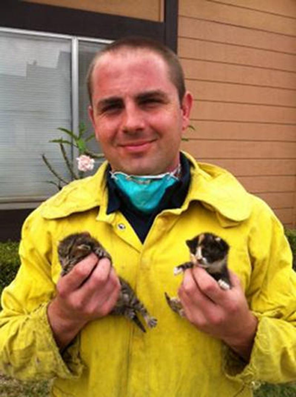 Firefighters Rescue Trapped Kittens From Wall & Find Them Temporary Homes