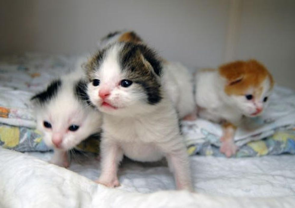 4 Kittens Found In Cardboard Box Near Dumpster, Now Safe!
