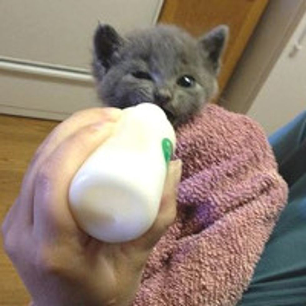 Cable Workers Rescue Kitten Trapped in Six Feet Pipe