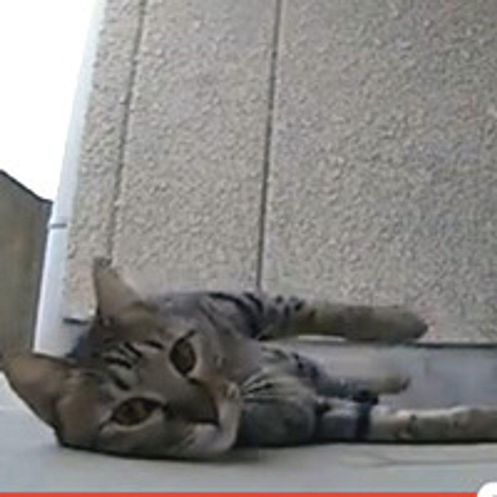 Cat Loves Rubbing Concrete Floor