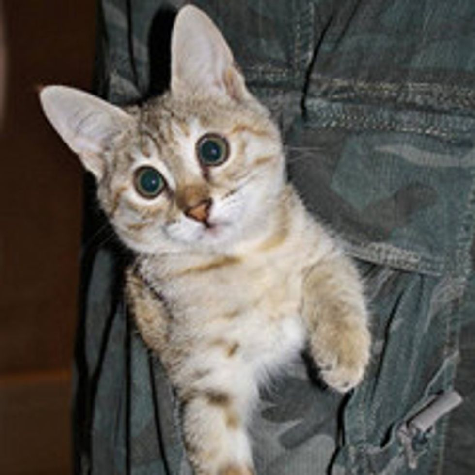 Lucy The Cat: Blind But Perfect!