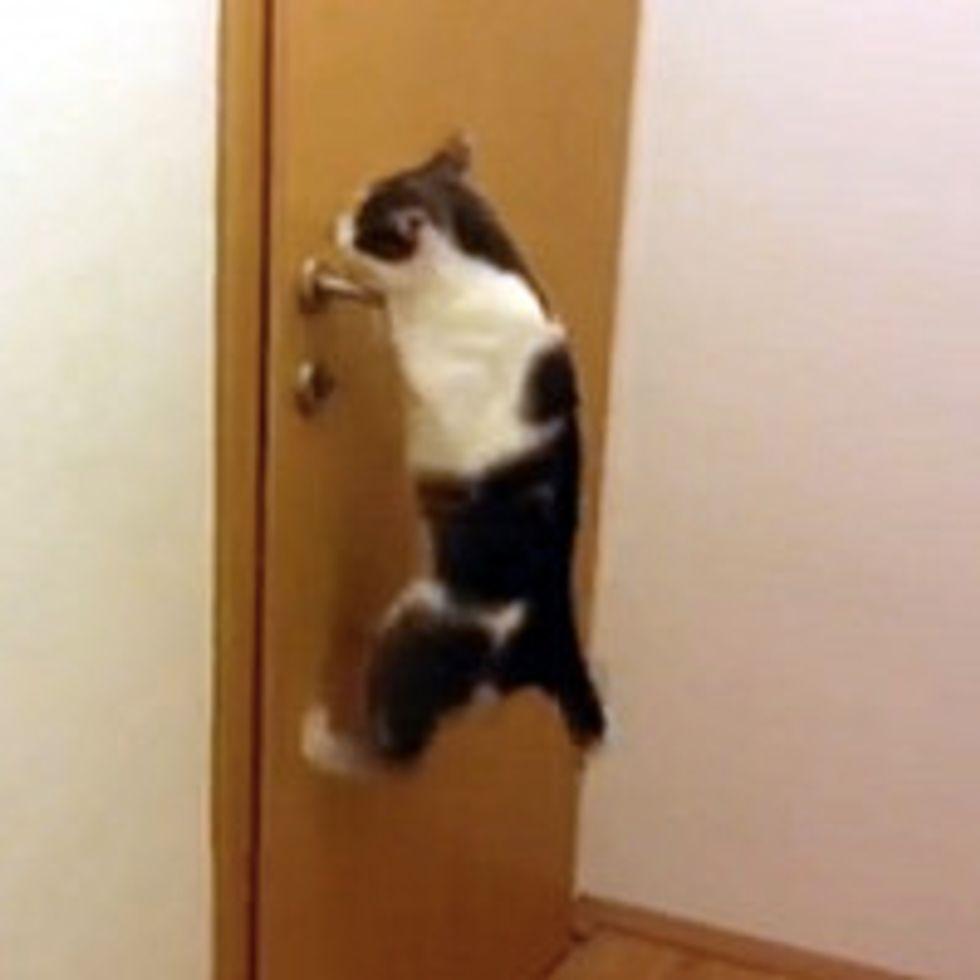 Cat Open Five Doors