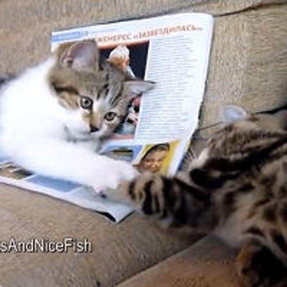 Kittens Playing Paw Slaps