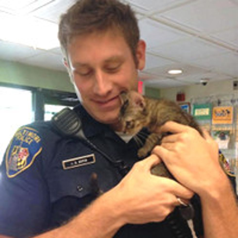 Stray Kitten Finds Police Officer To Go Home To