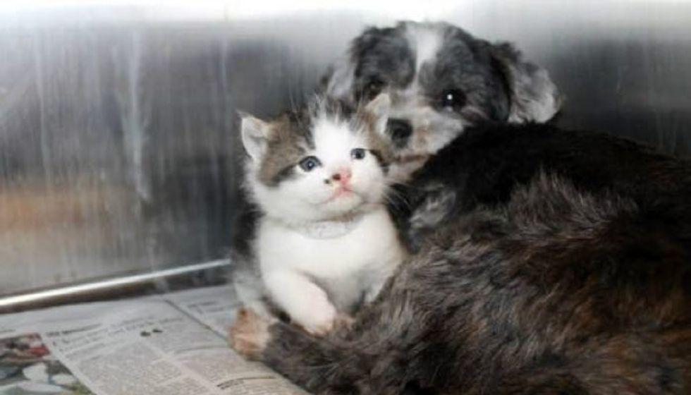 Rescue Dog Found Nursing An Abandoned Kitten