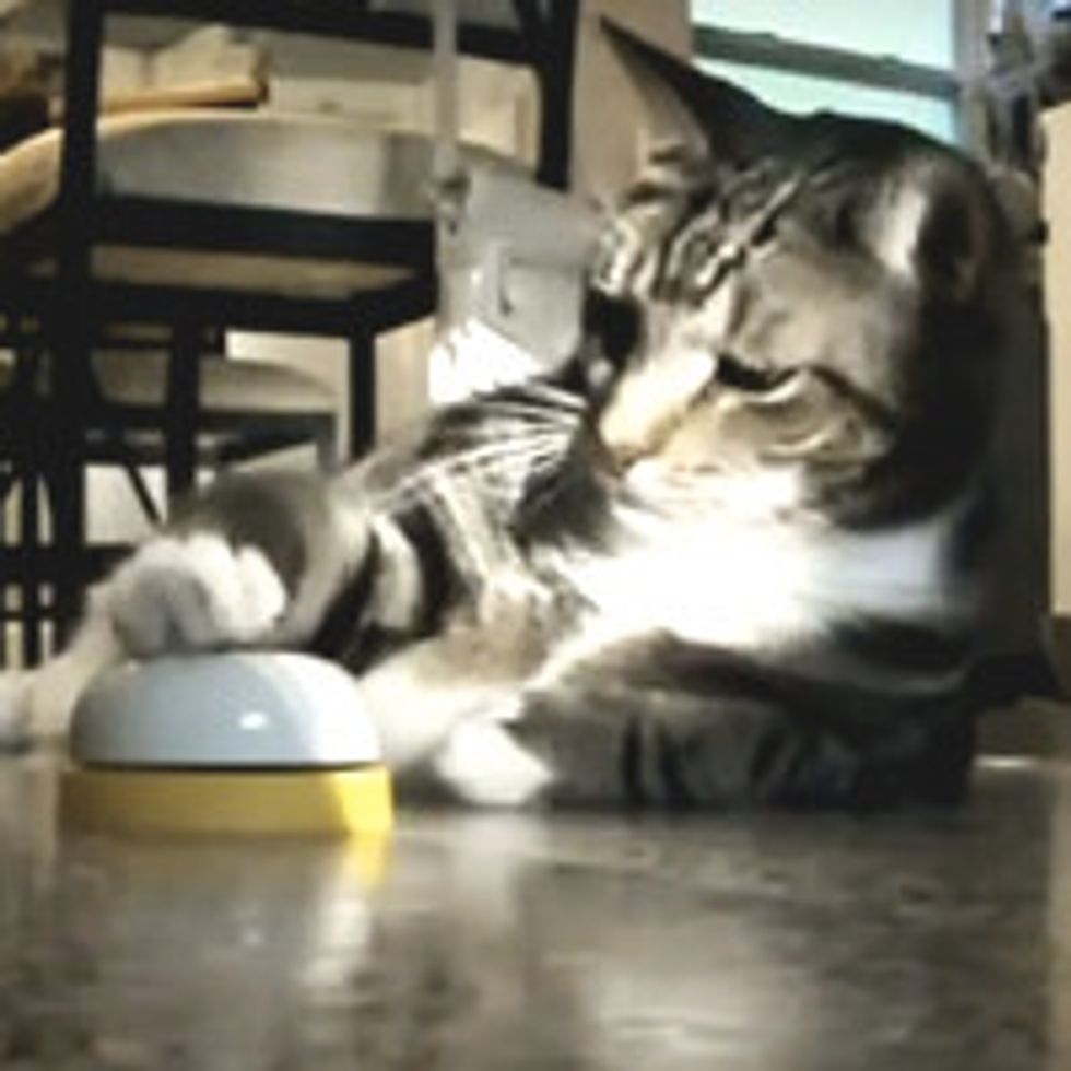 Cat Trains Human To Feed On Command