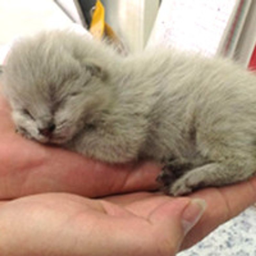 Tiny Kittens Found Inside Bus Get A Second Chance