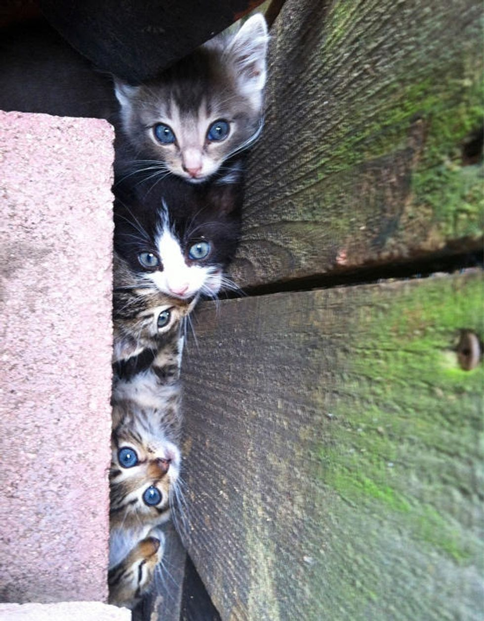 Feral Kittens Found In A Hole