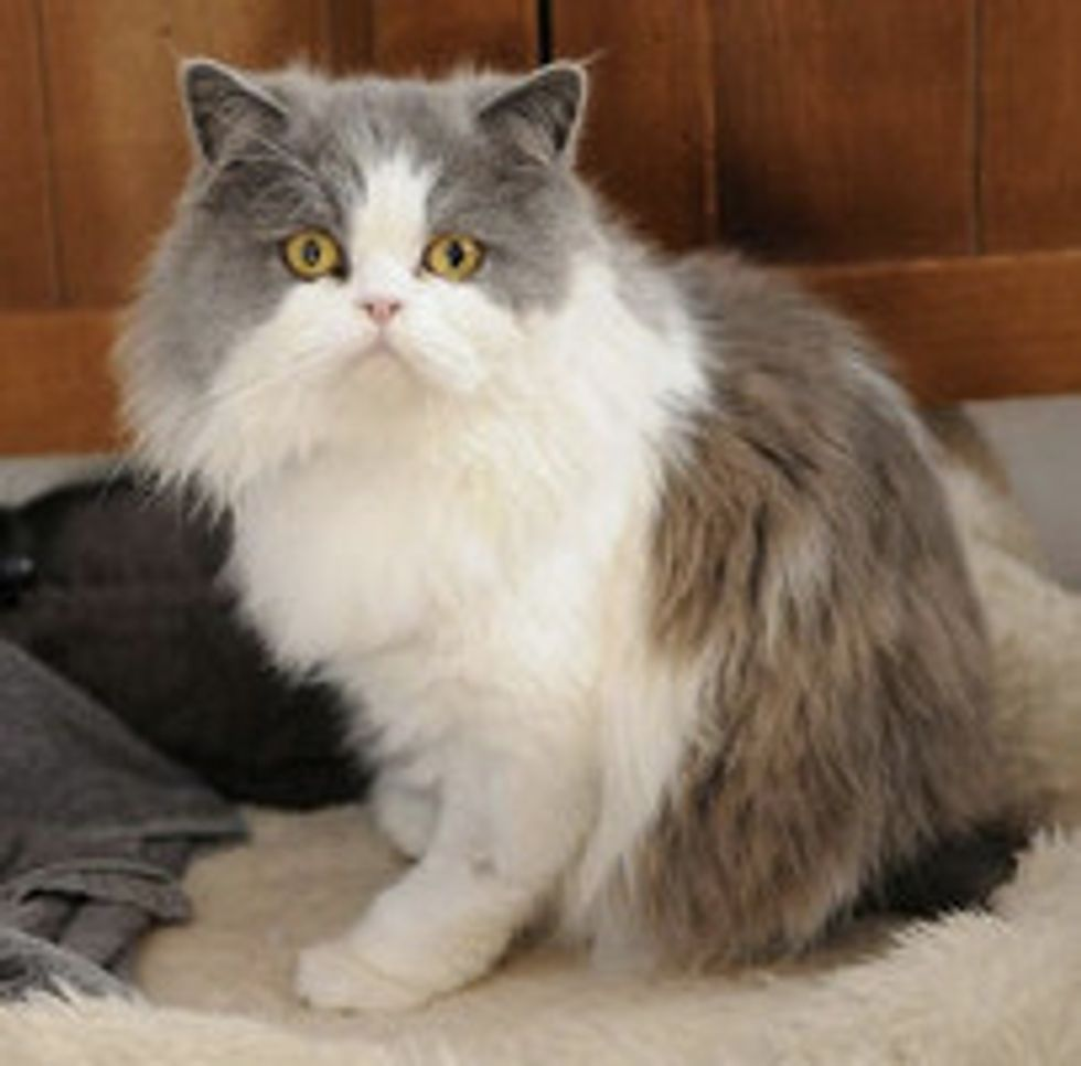Two-legged Cat: Super Ted Saved And Homed