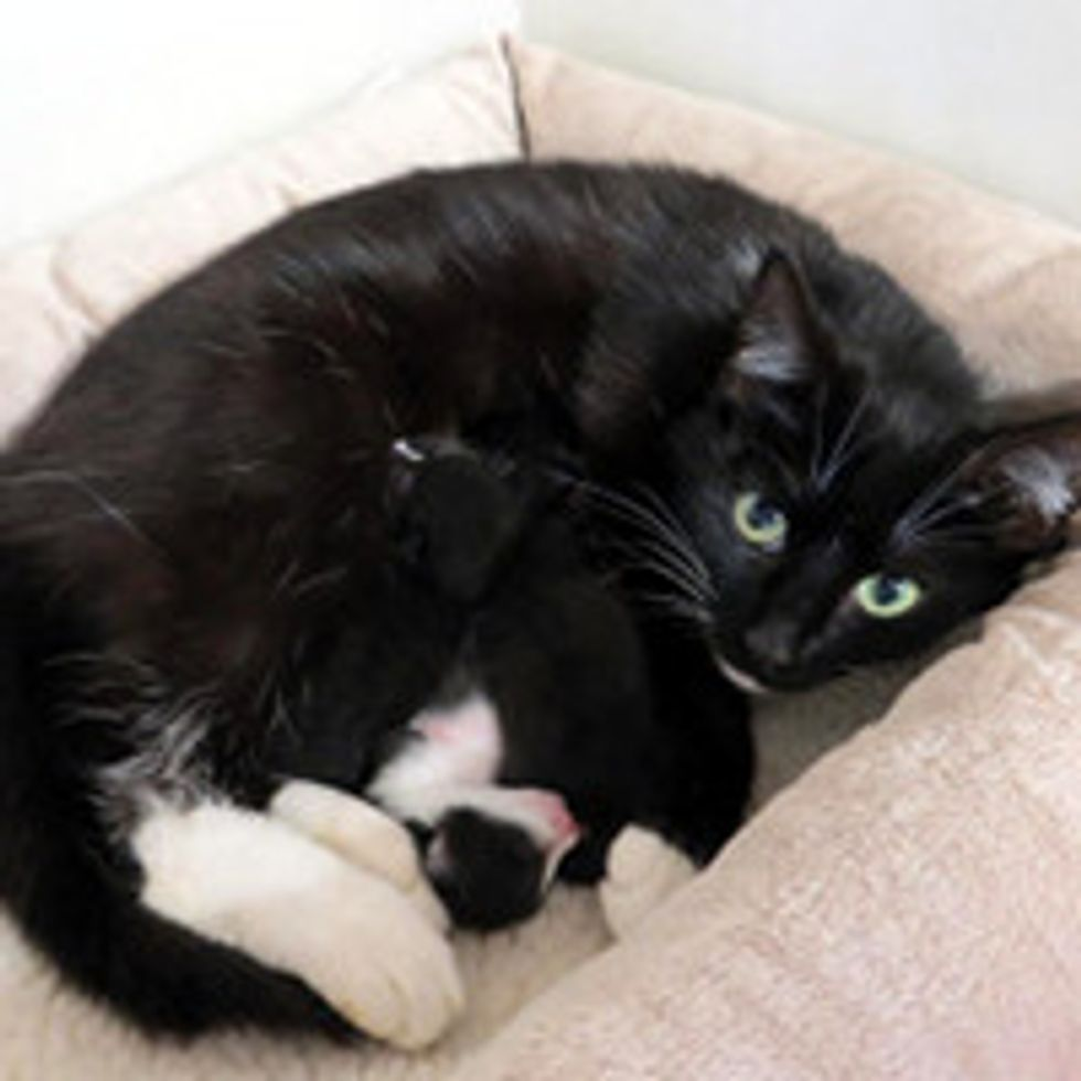 Cat Climbs Through Window of Home & Gives Birth Under Boy's Bed