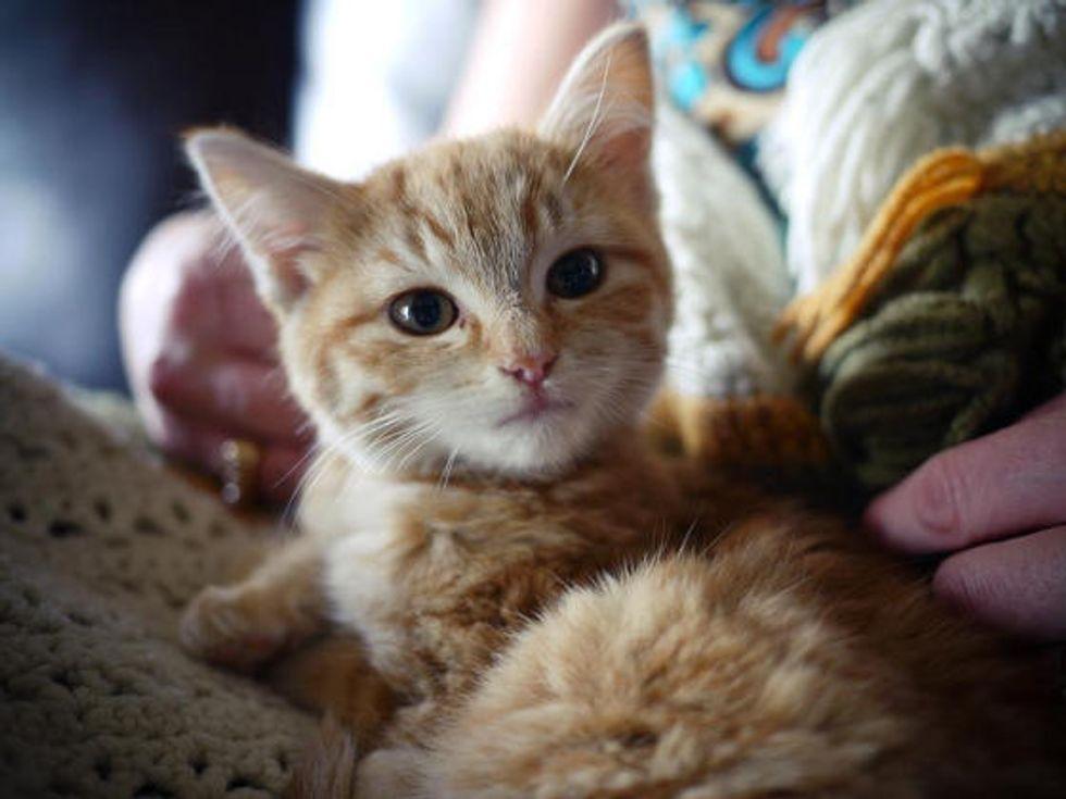 Homeless Deaf Kitten Turns Into Happy Deaf Cat