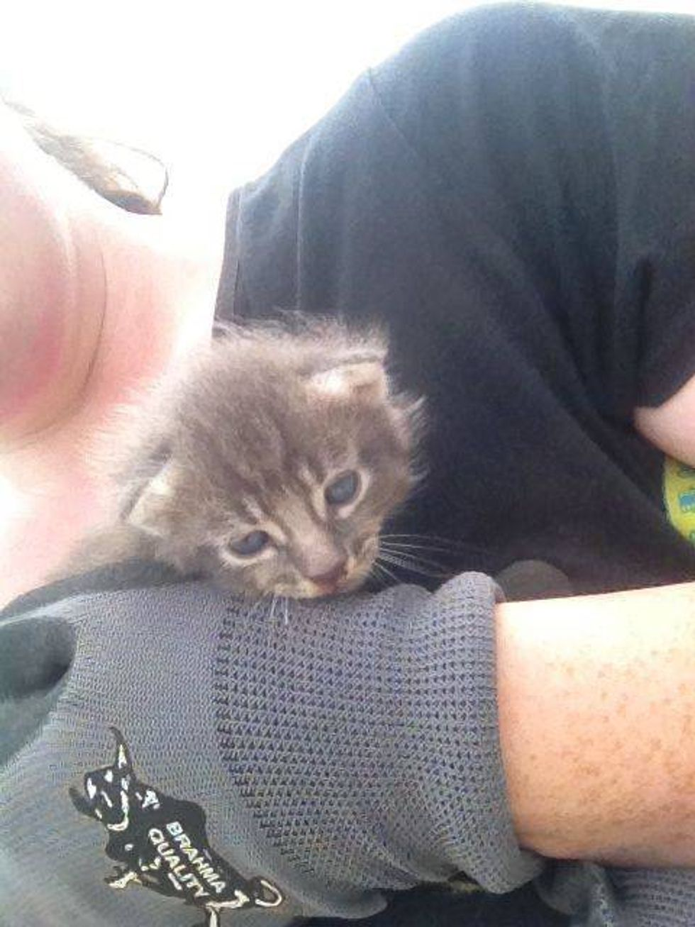 Kitten Rescued From Under Rubble After Huge Tornado