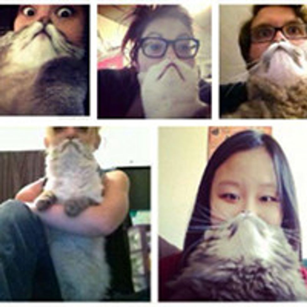 The Cat Bearding Craze